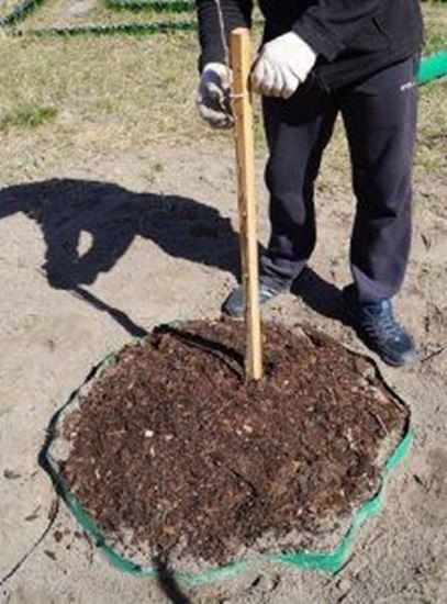 Изображение Посадка растений: деревья, цветы, кусты