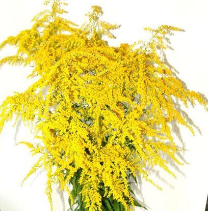 купить садовые цветы с доставкой Киев Украина, интернет - магазин