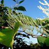 купить высокие кустовые растения доставка Киев Украина